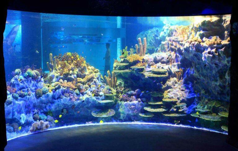 Chengdu Aquarium