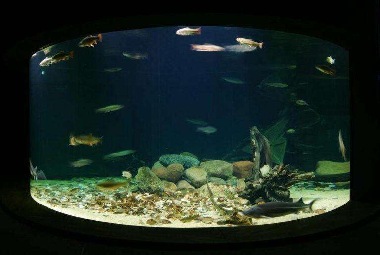 ozeaneum aquarium